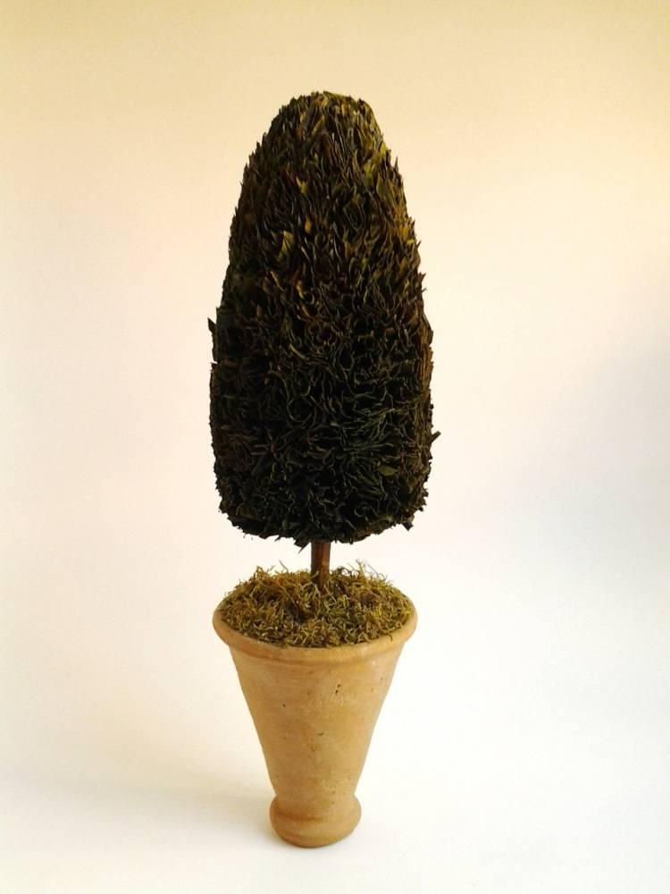 živý dekoračný stromček kužel 11 x 38 cm