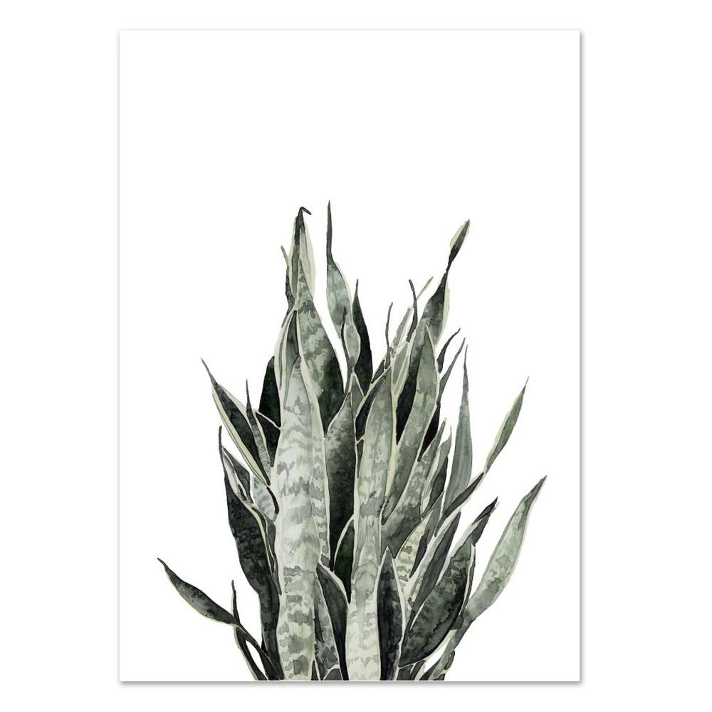 Plagát Leo La Douce Sansevieria, 21 x 29,7 cm