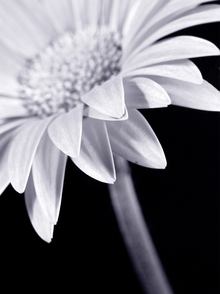 Roxy - Sunflower 30x40 cm