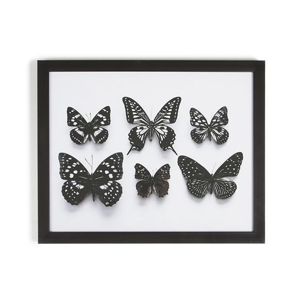 Obraz v ráme Graham&Brown Botanical Butterfly,50x50cm
