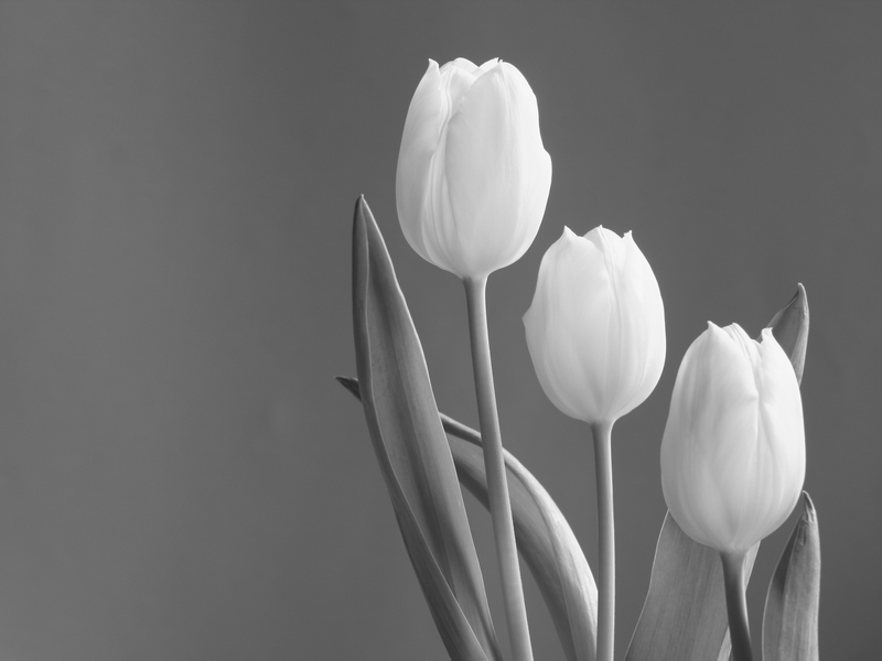 Roxy - Tulips 40x30 cm