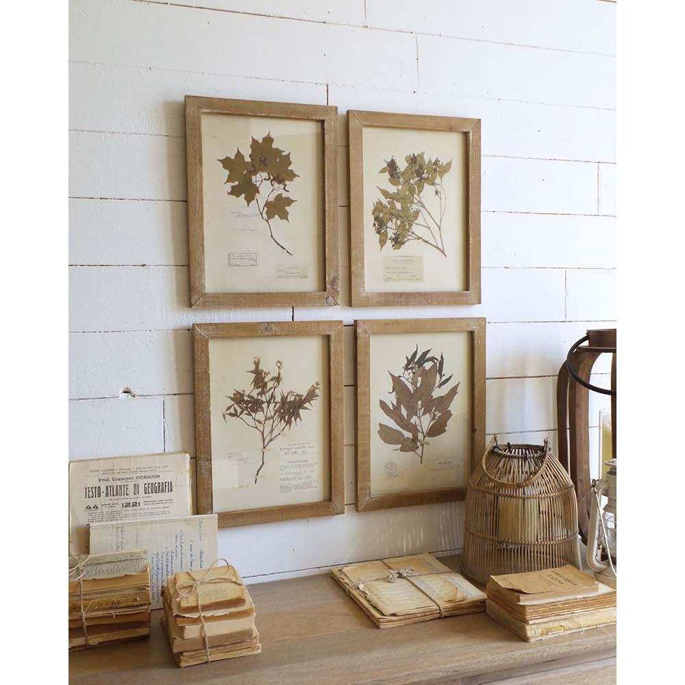 Set 4 obrazov v drevených rámoch Orchidea Milano Botanica