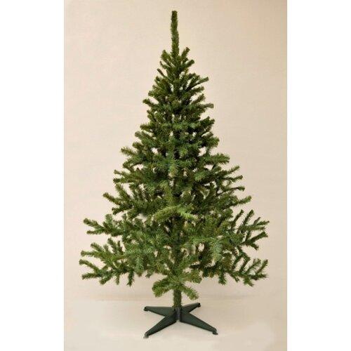Vianočný stromček Smrek kanadský, 210 cm