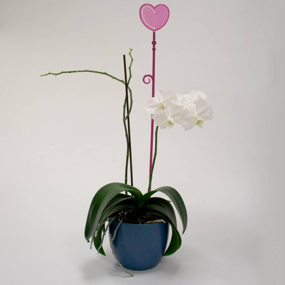 Tyčka k orchideji srdce, priesvitná fialová, 2 ks, Plastia