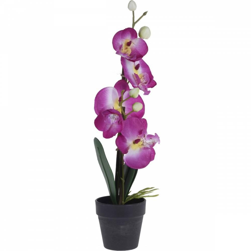 Orchidea v kvetináči ružová, 38 cm