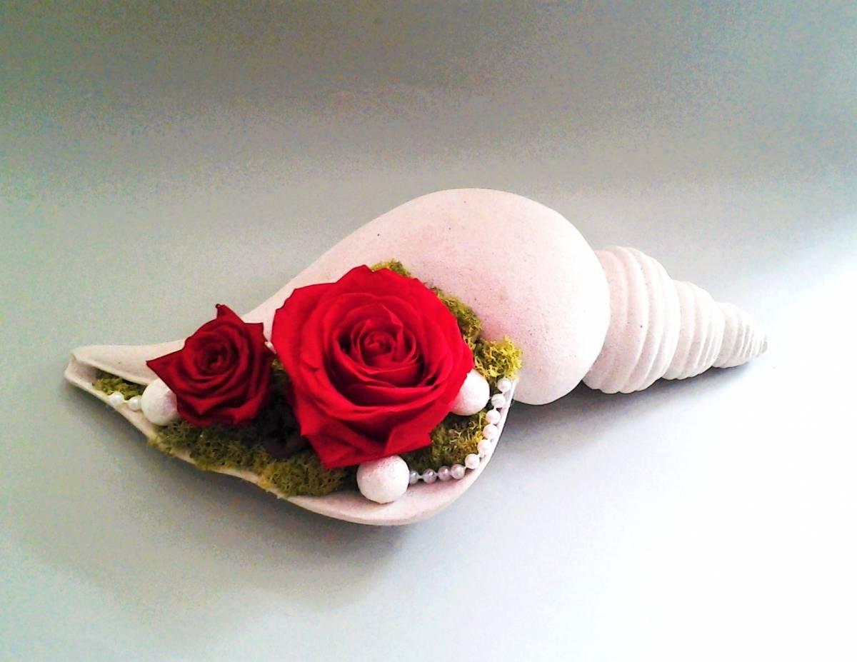 mušľa s červenými balzamovanými ružami 33 x 15 x 11 cm